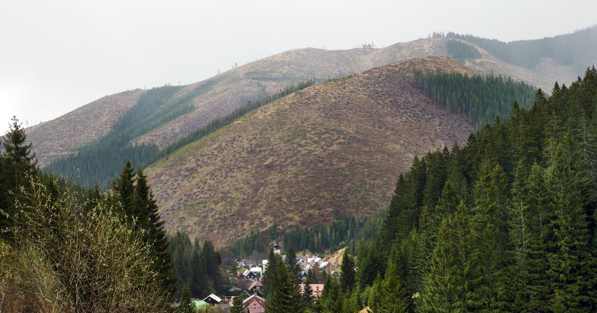 drancovanie lesov
